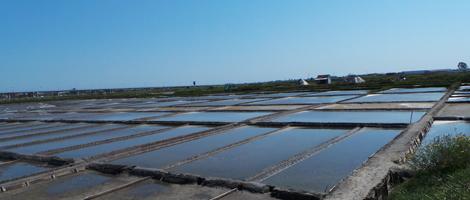 salinas-aveiro-salicornia-bebespontocomes