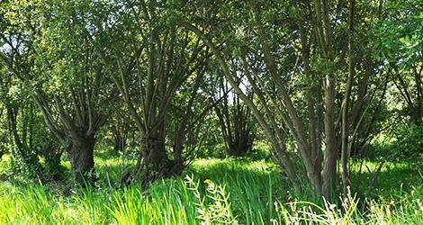 taboeira-aveiro-paisagem-bocage-bebespontocomes