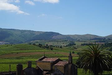 Quinta do Gradil e o Viognier