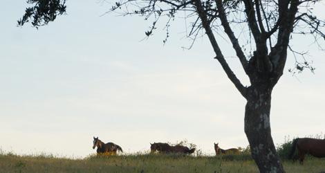 cavalos-quinta-boavista-terras-torre-tavares-pina-super-freak-bebespontocomes