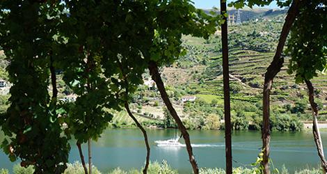 laboratorio-adjectivos-rio-douro-vinho-piorro-encosta-bocho-1912-winemakers-bebespontocomes
