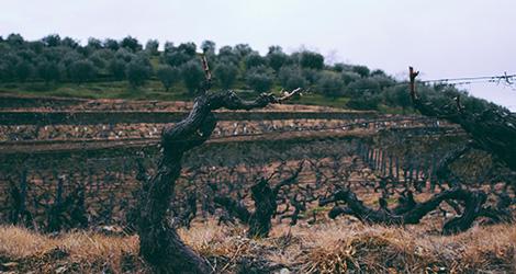vinhas-douro-real-companhia-velha-quinta-das-carvalhas-vinho-branco-2010-vintage-tour-bebespontocomes