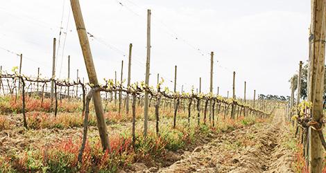 vinho-vadio-cerceal-bical-vinhas-2013-luis-patrao-poutena-bairrada-bebespontocomes