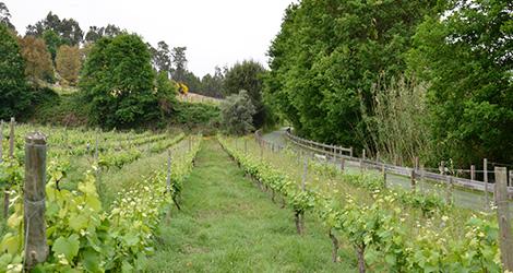 vinhas-eco-pista-dao-casa-mouraz-rocks-vinho-2011-quinta-bebespontocomes