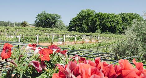 vinho-quinta-de-couselo-rosal-rias-baixas-espanha-albarinho-loureiro-2013-bluscus-maridaje-quinta-flores-bebespontocomes