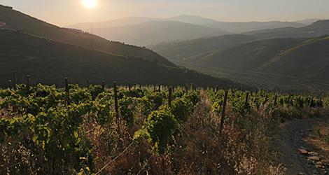 o-tesouro-vinho-alentejo-explicit-2014-vinhas-velhas-hotel-quinta-casaldronho-douro-lamego-valdigem-vinhas-sunset