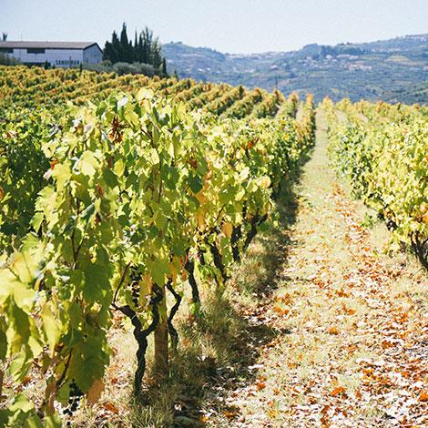 a-luz-da-quinta-da-pacheca-douro-vinho-porto-branco-tinto-restaurante-wine-hotel-bebespontocomes-vinhas-sandeman
