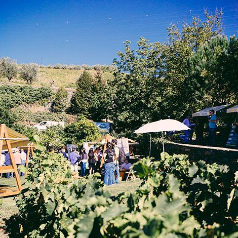 douro-boys-draping-feira-quinta-vallado-bebespontocomes-vinhas