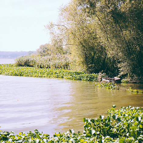 minimalismo-vinho-verde-arinto-azal-modestus-2014-pateira-aveiro-bebespontocomes-barco