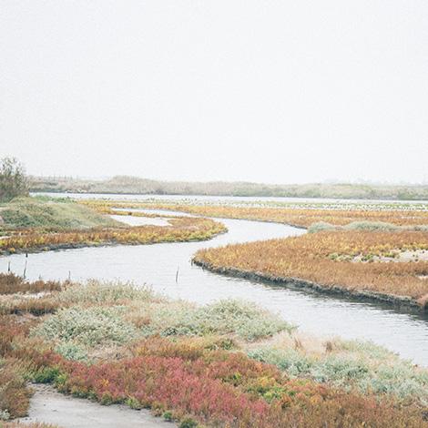 ilha-dos-puxadoiros-tony-martins-ostras-sushi-ria-aveiro-sal-salinas-salicornia-bebespontocomes-salicornia-paisagem