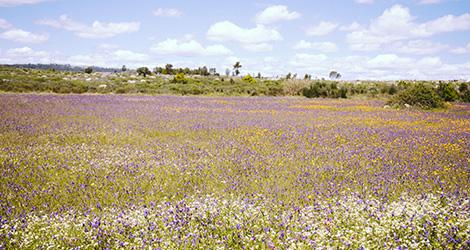 rectangular-flower-power-vinho-verde-casa-arrabalde-linhares-da-beira-paisagem-bebespontocomes
