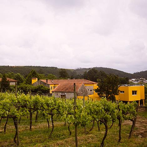 quadrada-vista-ready-to-go-vinho-verde-quinta-de-lourosa-alvarinho-arinto-2014-visita-prova-vertical-turismo-rural-lousada-bebespontocomes