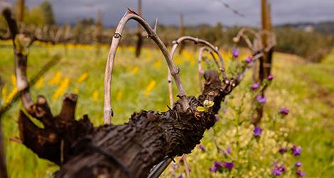 retangular11-fazer-dos-vinhos-coracao-bebespontocomes