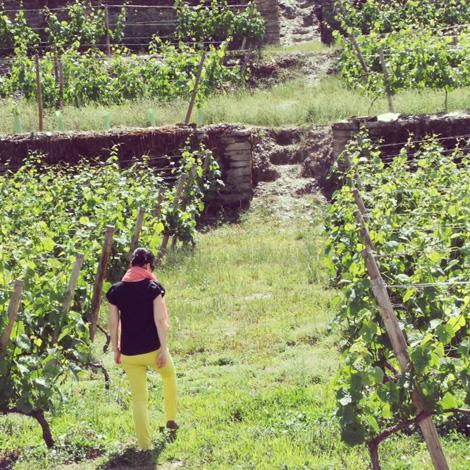 vinhas-brites-aguiar-bebespontocomes