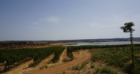 herdade-esporao-paisagem-bebespontocomes