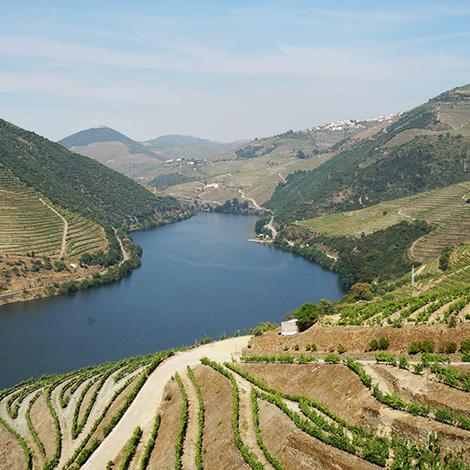 vinhas-quinta-popa-douro-bebespontocomes