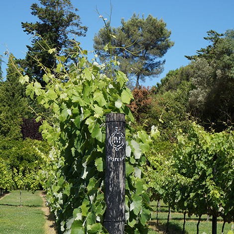 castelao-jardim-jose-maria-fonseca-azeitao-setubal-enoturismo-bebespontocomes