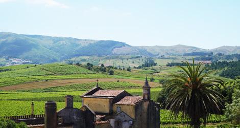 quinta-gradil-paisagem-serra-montejunto-vinho-lisboa-viognier-bebespontocomes