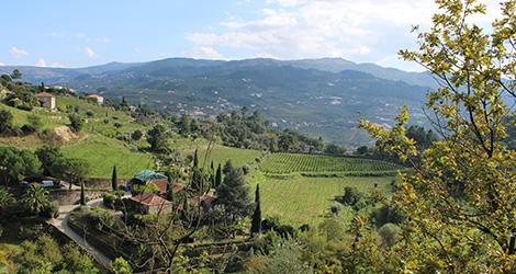 quinta-covela-adn-baiao-vinhos-verdes-bebespontocomes