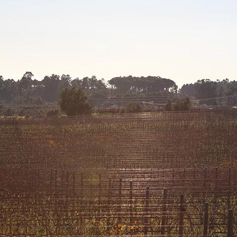 vinhas-casa-santar-dao-encruzado-outono-bebespontocomes