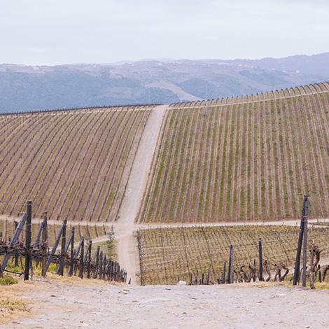 vinho-alvarinho-quinta-cidro-vinhas-paisagem-real-companhia-velha-sao-joao-pesqueira-baixela-bebespontocomes