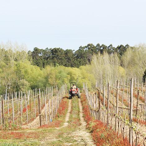vinho-vadio-cerceal-bical-vinhas-2013-luis-patrao-poutena-bairrada-vadiagem-bebespontocomes