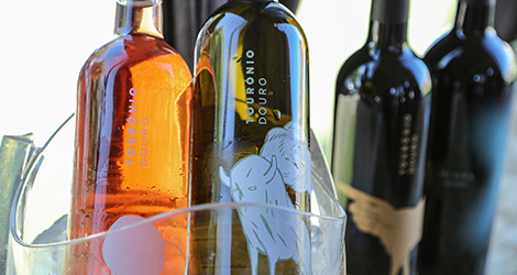 ambiente-wine-sessions-bebespontocomes-prova-vinhos-aveiro-bebes-comes-festa-quinta-tourais-douro-lamego-touronio-miura