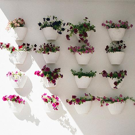 a-luz-da-quinta-da-pacheca-douro-vinho-porto-branco-tinto-restaurante-wine-hotel-bebespontocomes-flores