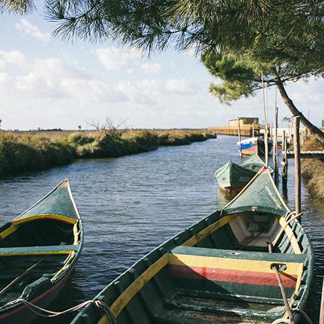 birdwatching-vinho-tyto-alba-2012-barcos-ria-paisagem-bebespontocomes