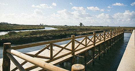 birdwatching-vinho-tyto-alba-2012-cais-paisagem-bebespontocomes