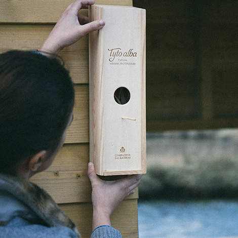birdwatching-vinho-tyto-alba-2012-montagem-bebespontocomes