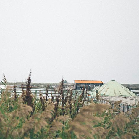 ilha-dos-puxadoiros-tony-martins-ostras-sushi-ria-aveiro-sal-salinas-salicornia-bebespontocomes-casa-salinas