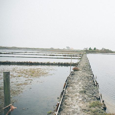ilha-dos-puxadoiros-tony-martins-ostras-sushi-ria-aveiro-sal-salinas-salicornia-bebespontocomes-foto-art
