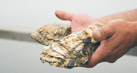 ilha-dos-puxadoiros-tony-martins-ostras-sushi-ria-aveiro-sal-salinas-salicornia-bebespontocomes-oysters-france